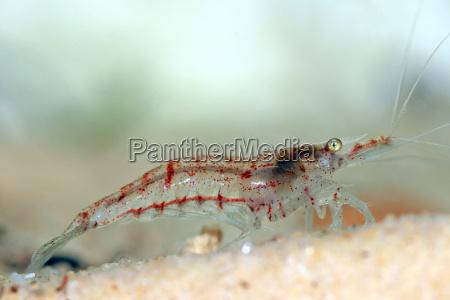 legs animal mollusc aquarium eye organ