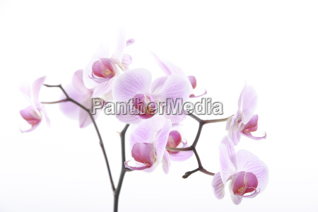 orchid - 565639