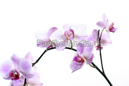 orchids - 565633