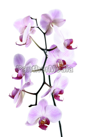 orchids - 565635