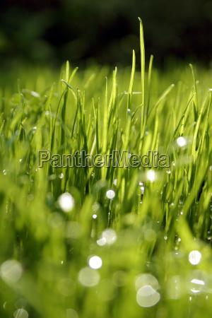 grass, dew, drops - 566634