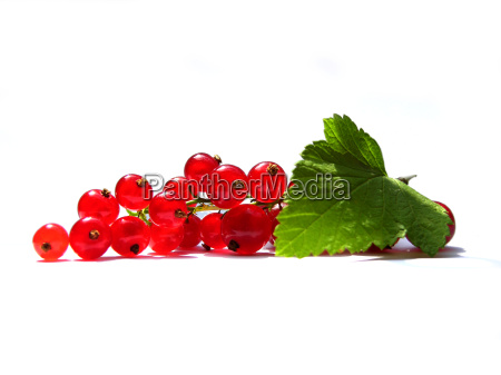 red, currant - 569340