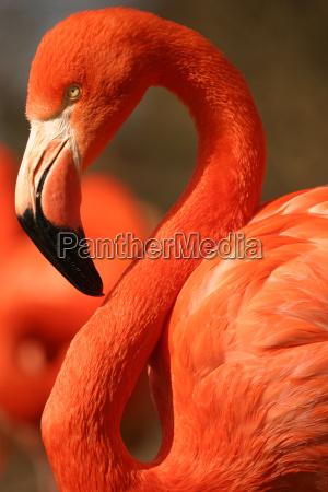 flamingo - 572690