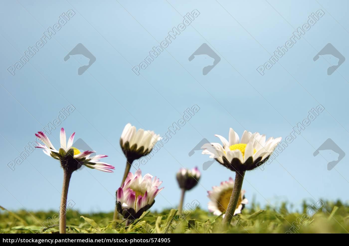 spring, awakening - 574905