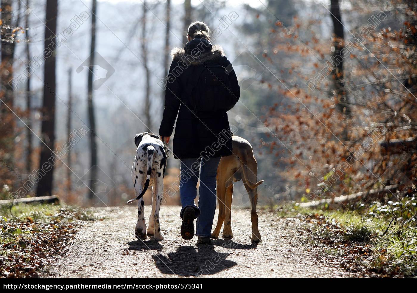 dog, walk - 575341