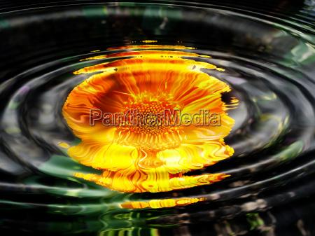 water flora flowers water