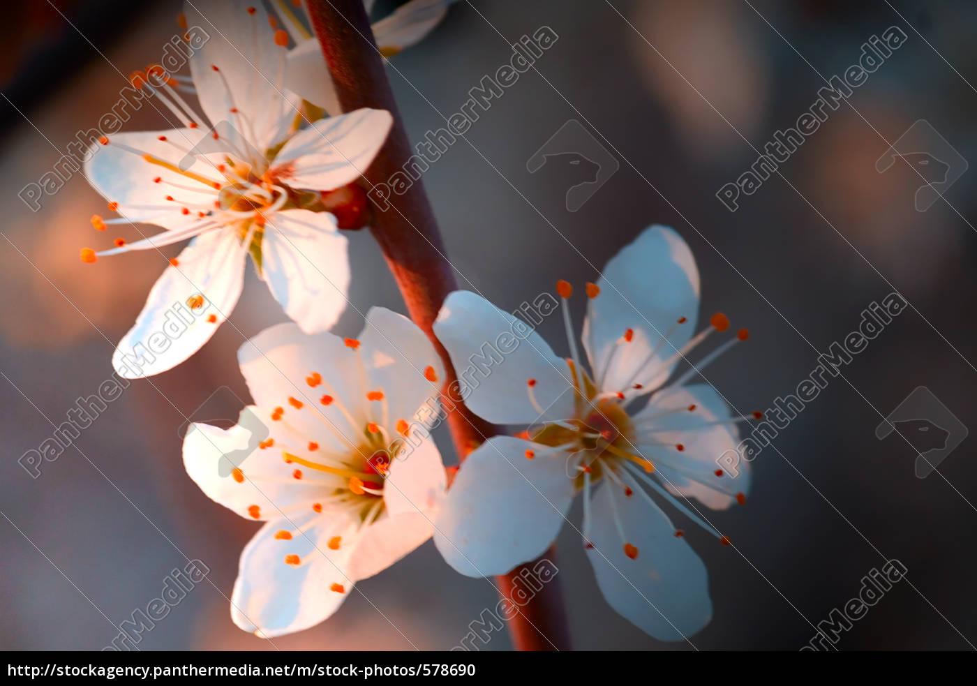 la, charme, du, printemps - 578690