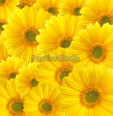 summer, garden - 578541
