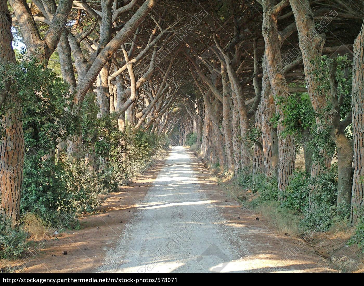 tuscan, ave. - 578071