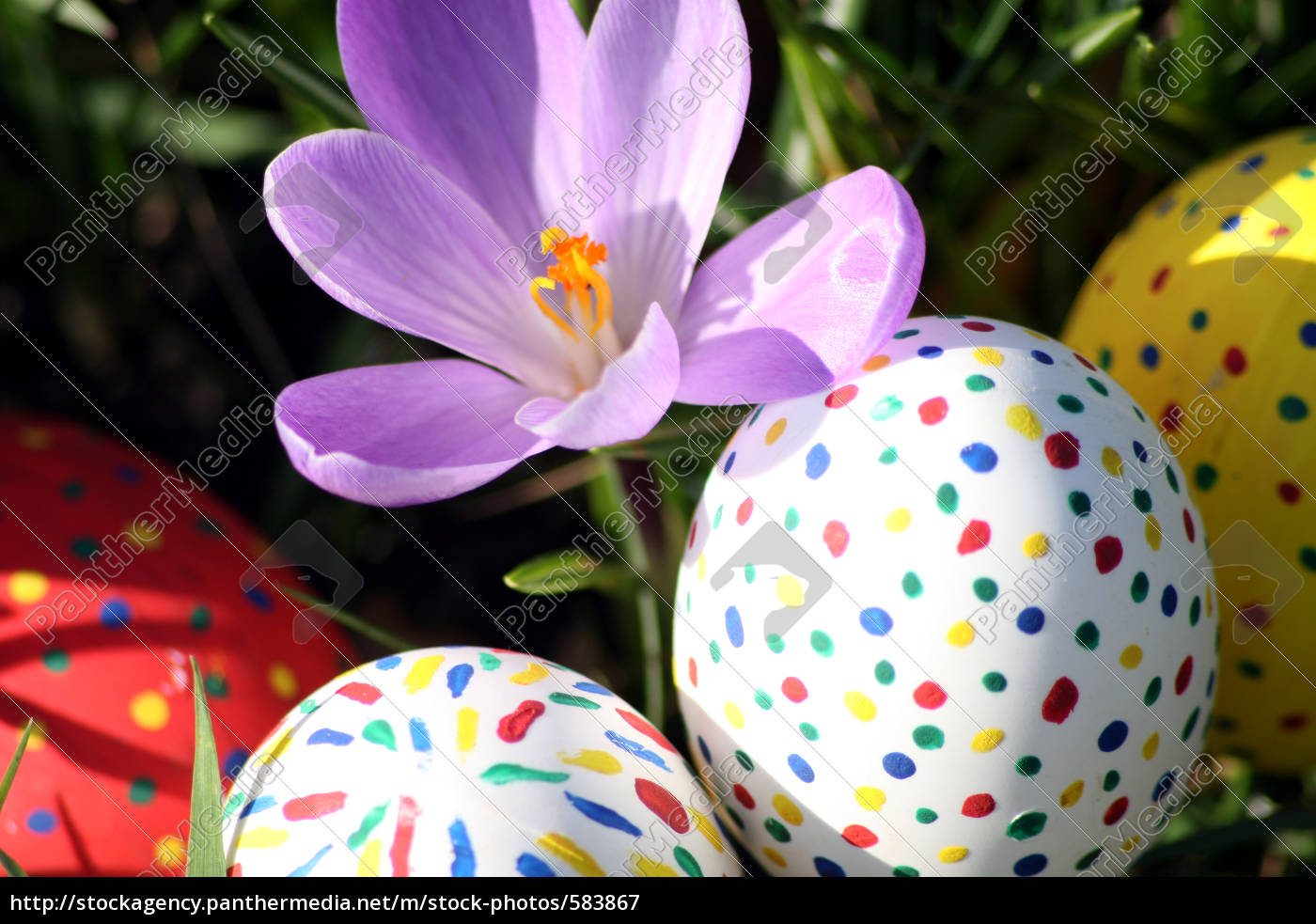 crocus, with, easter, eggs - 583867