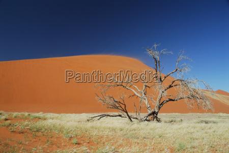 dune, 45 - 583239