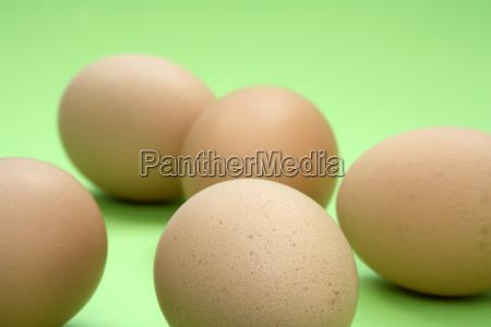 eggs - 584092