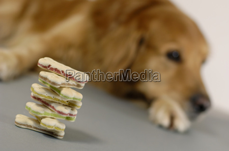 dog cake stack with dog in
