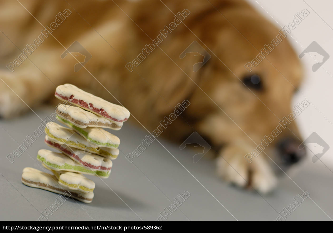 dog, cake, stack, with, dog, in - 589362