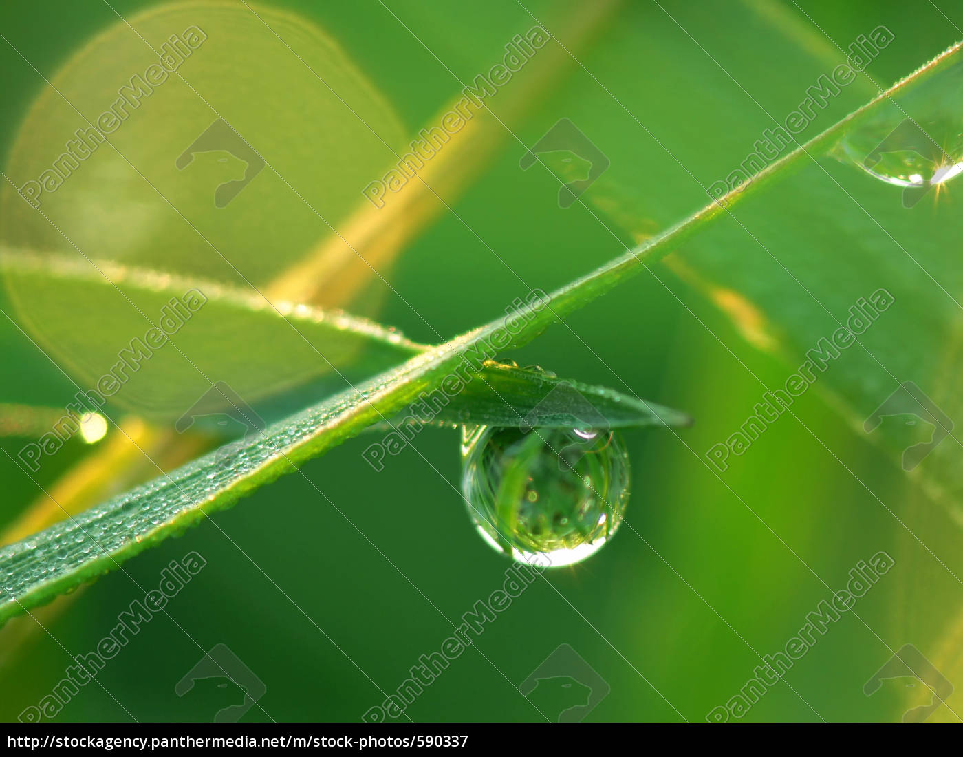 dewdrops, in, the, morning - 590337