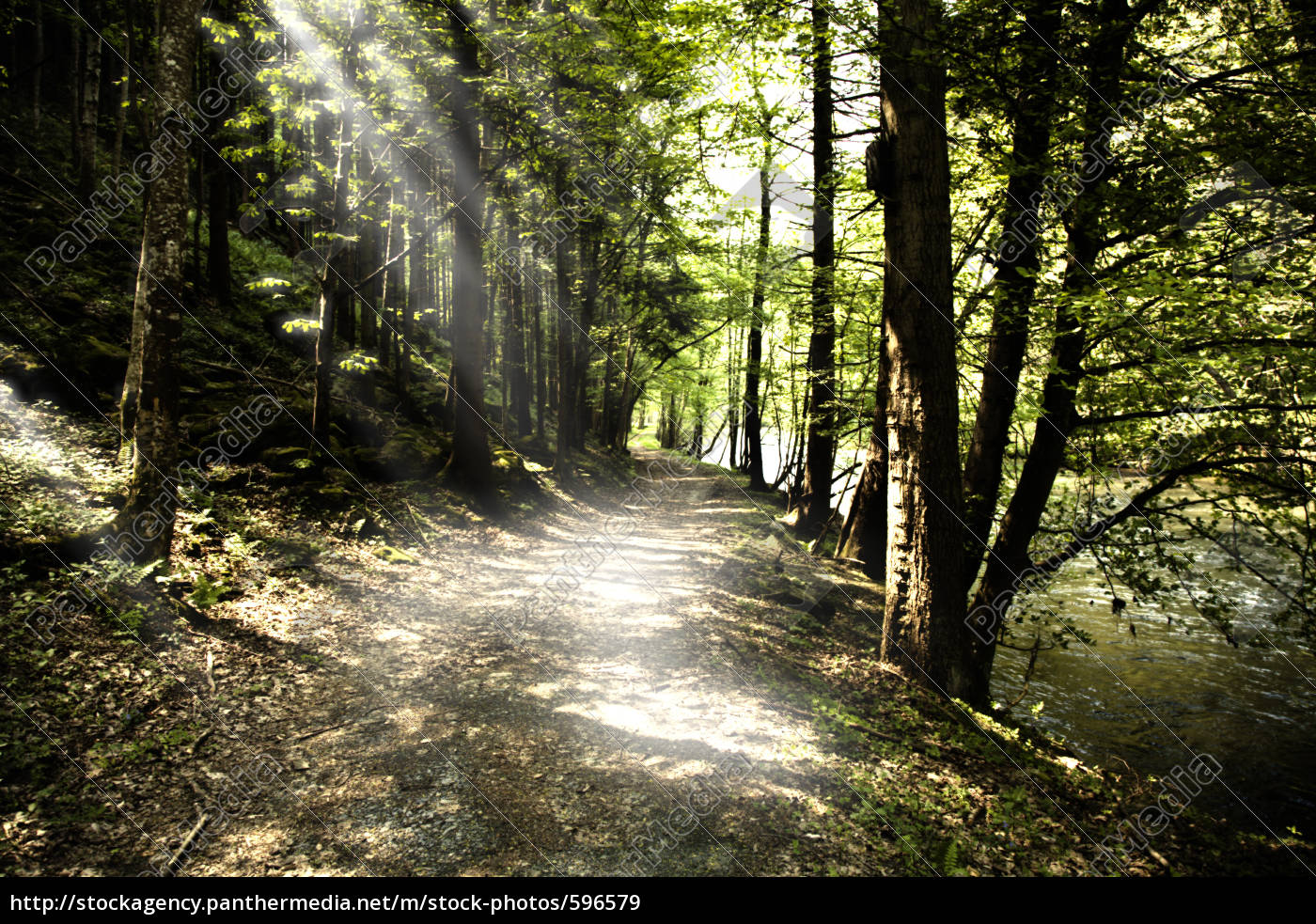 forest, road - 596579