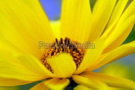 gaudy, yellow - 597643