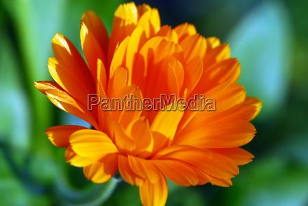 gaudy, orange - 598899