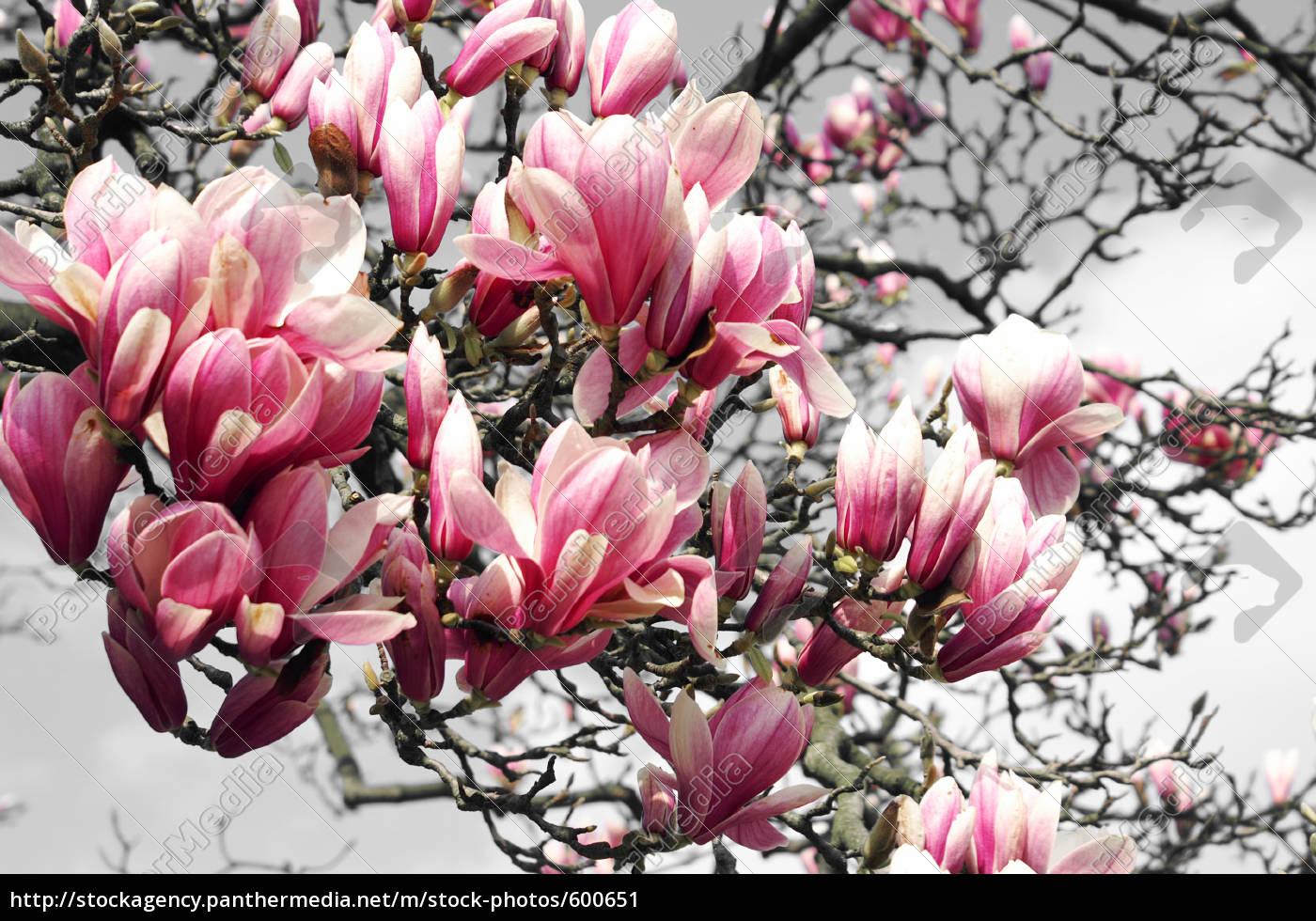 spring, fever - 600651