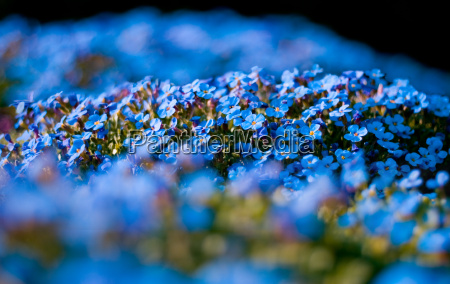 bright, blue - 601472