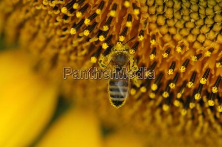 in pollen paradise