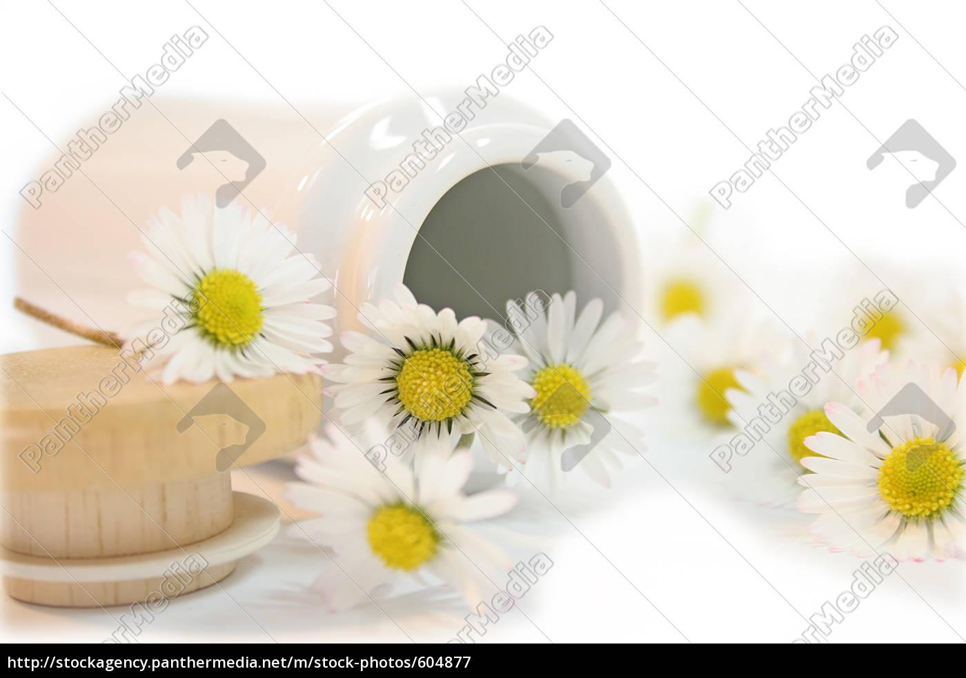 daisy, iv - 604877