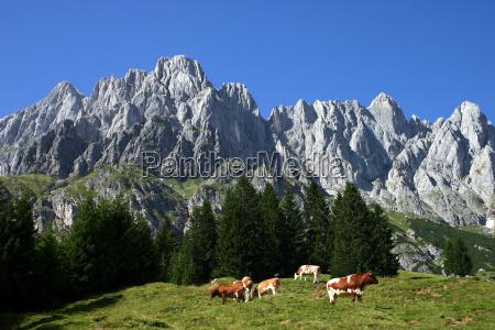 pastures, under, hochkönig - 605934