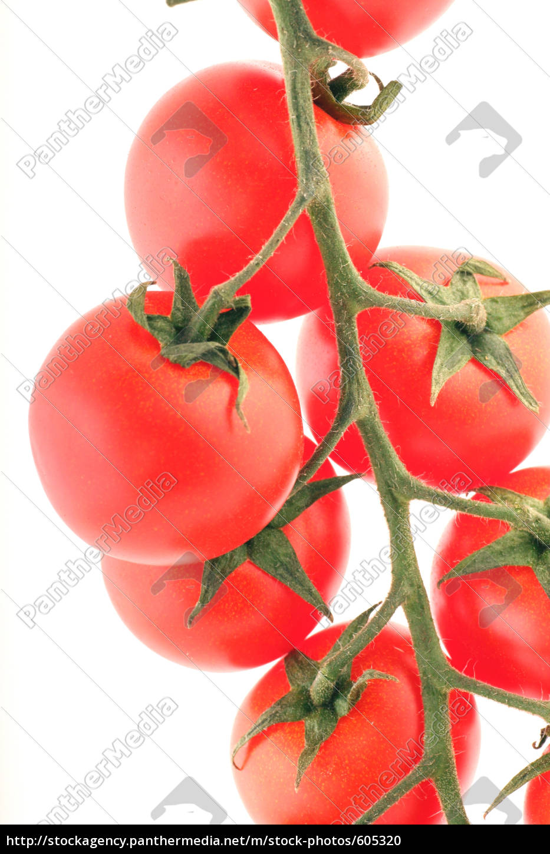 tomatoes - 605320