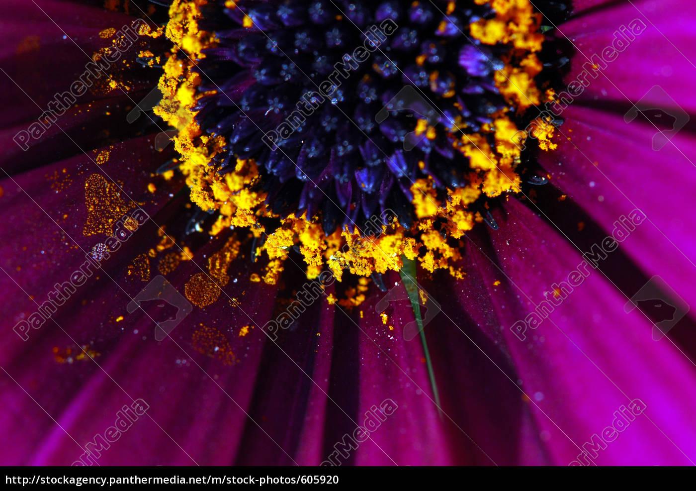violet - 605920