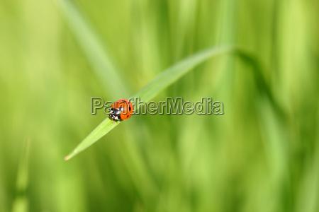 ladybird - 608188