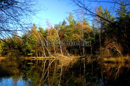 tree trees waters swamp mirroring fen