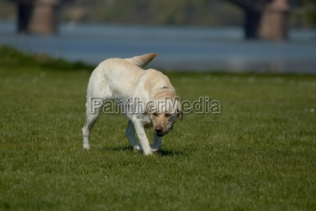 playful dog i