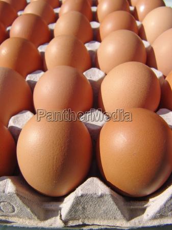 brown, eggs - 611413