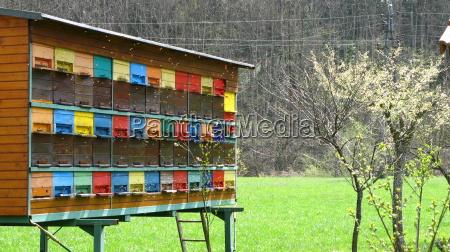 slovenia, -, beehive - 611004