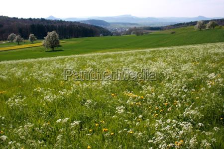 meadow, with, hega, peaks - 612923