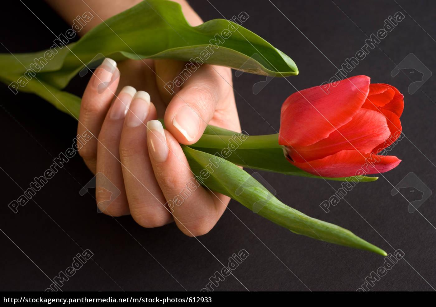 woman's, hand - 612933