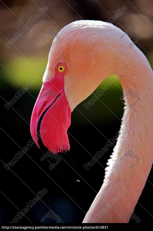 beautiful, bird - 614851