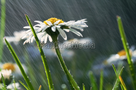sea, detail, in, the, rain - 617814