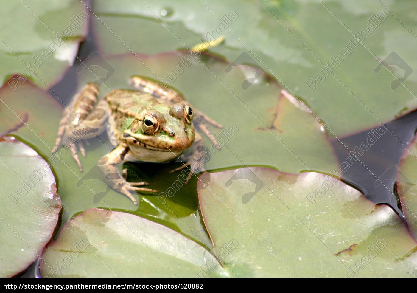frog - 620882