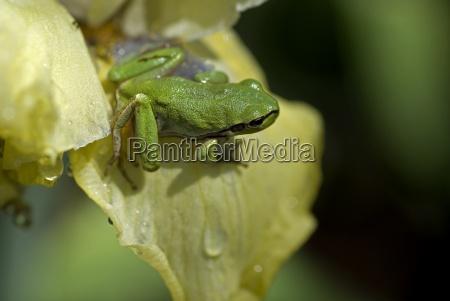 green, frog, v - 620344