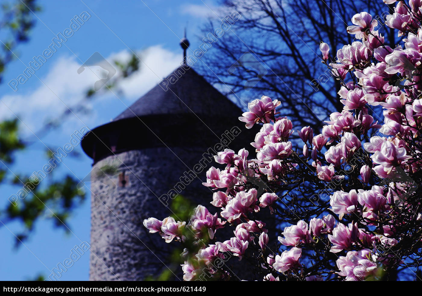 magnolia, with, tower - 621449