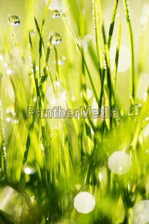 grass - 623520