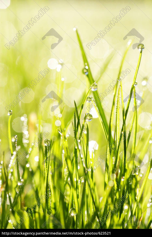 grass - 623521