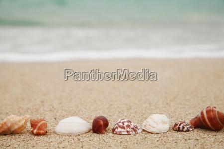 shells - 623692