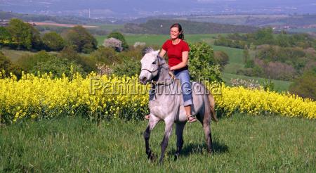 arabian stallion in spring landscape
