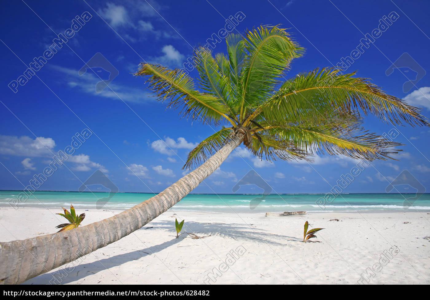 caribbean, dream - 628482