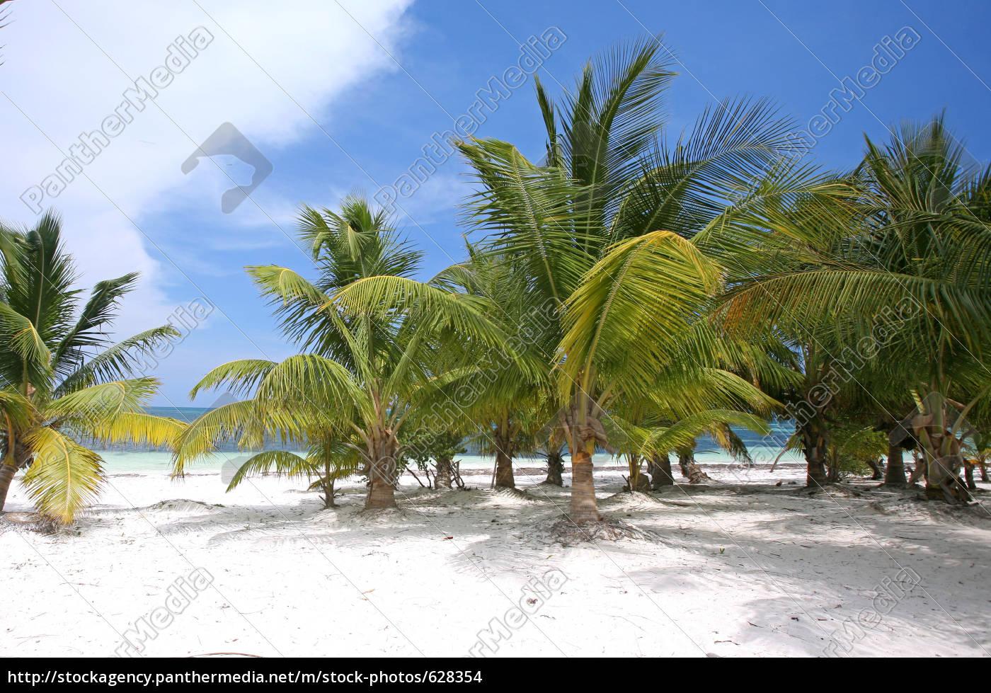 palm, garden - 628354