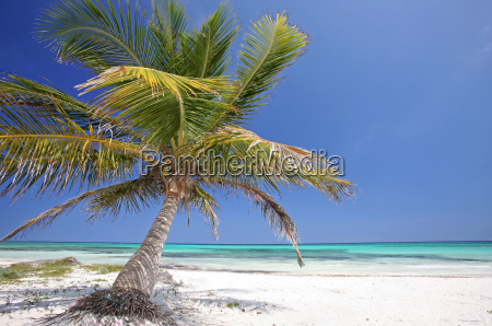 paradise - 628334