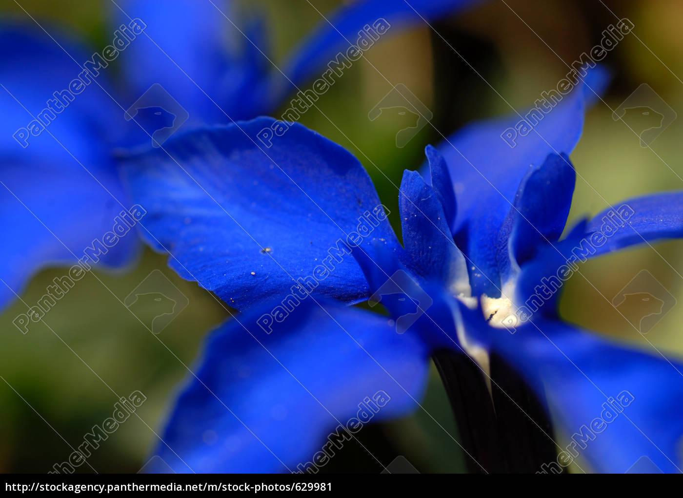 blue, splendor - 629981