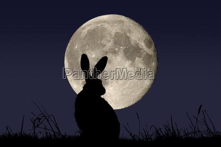 full, moon, on, the, field - 632626